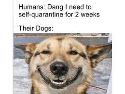 These hilarious memes describe our pets' coronavirus quarantine – Film Daily